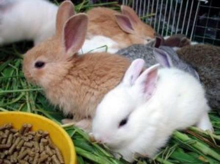 Рецепты комбикорма для кроликов