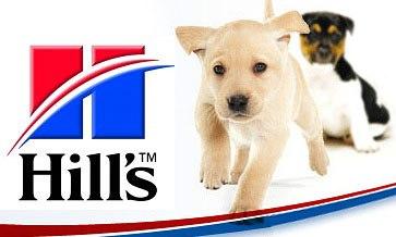 две собаки и корм Хилс