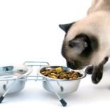 Чем кормить кошку: правильный рацион питания