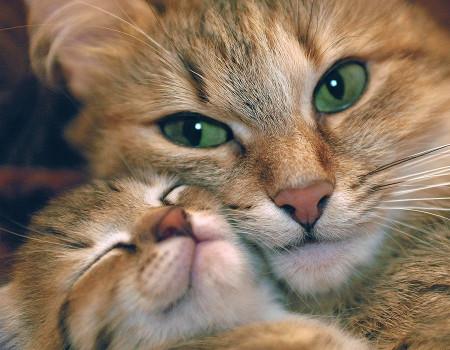 Соотношение кошачьего возраста с человеком