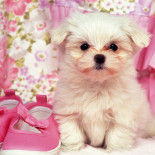 Маленькие породы собак: перечень, особенности содержания и ухода