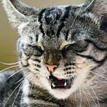 Кошка чихает: признаки, лечение в домашних условиях