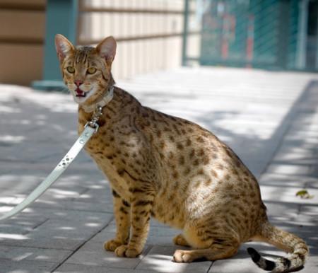 почему у котенка неприятный запах изо рта