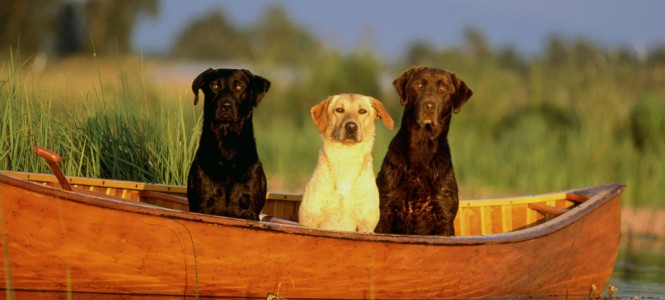 Охотничьи собаки: лучшие помощники в ловле добычи