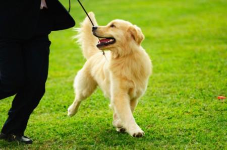 Правила воспитания собак