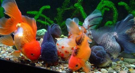 Правила содержания аквариумных рыб