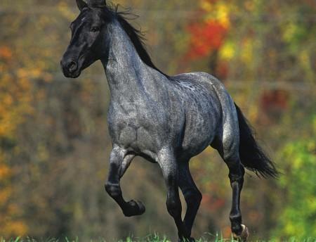 Серая лошадь бежит