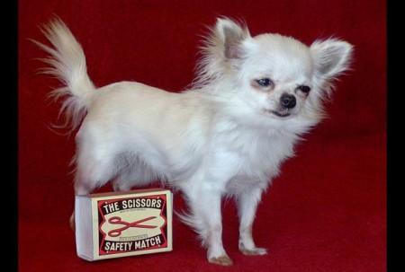 Маленькая собака с именем Данка