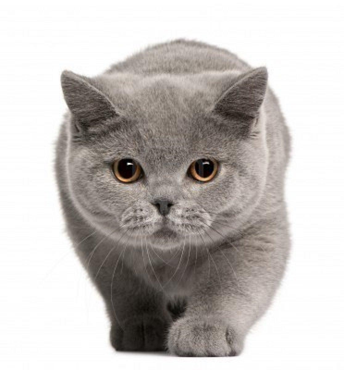 Котенок другой