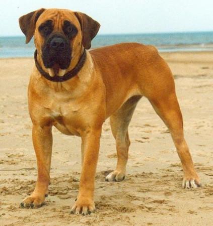 Бурбуль – это ласковый и приветливый пес