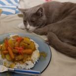 Кошка ничего не ест: причины и способы лечения