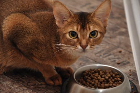 Пищевые добавки в корме кошек