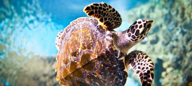 Водные черепахи: как ухаживать и содержать в домашних условиях?