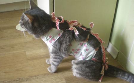 После стерилизации кошка гуляет с котом
