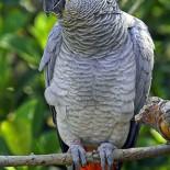 Попугаи жако: особенности питания и ухода