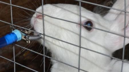 Как сделать поилку самому для кроликов