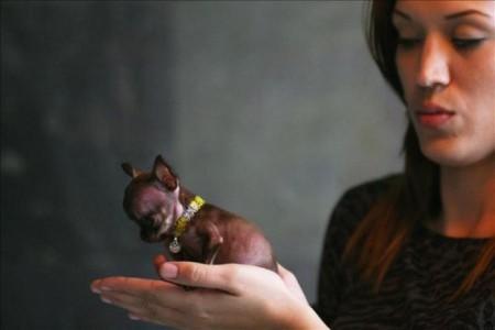 Какая из собак стала самой маленькой в мире?