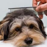 Как правильно ухаживать за животными