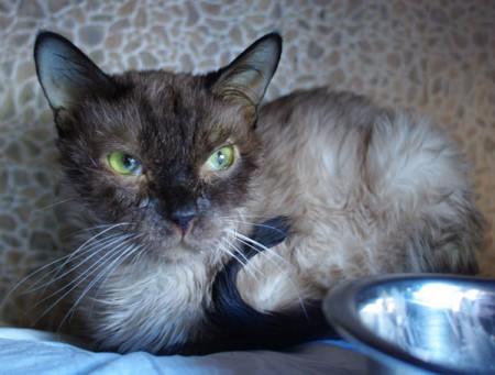 Симптомы кошачья чумка
