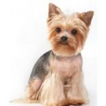 Особенности стрижки собак: виды и рекомендации