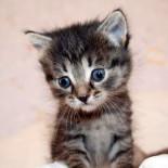 У котенка или взрослой кошки запор: что делать?
