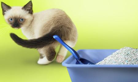 У котенка запор, что делать