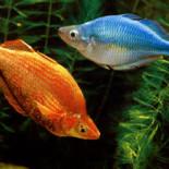 Уход за аквариумными рыбками и правильное содержание