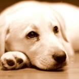 Какие лекарства от глистов подойдут собакам для лечения и профилактики