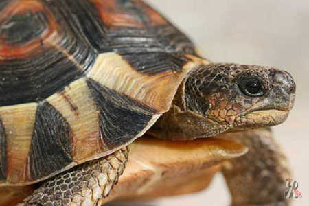 Белый налёт на панцире черепахи