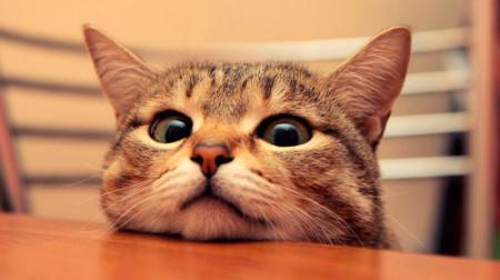 Почему кошка чихает - Мурлыка
