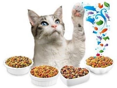 холистик корм для кошек особенности качество натуральные ингридиенты