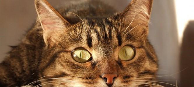 Как видят кошки: проблемы, дефекты