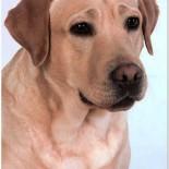 Факторы, влияющие на продолжительность жизни собаки