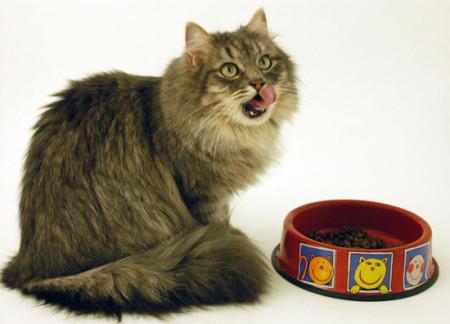 Правила питания кошек