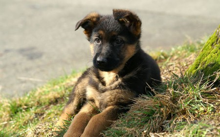 Как выявить причину поноса у собаки