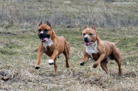 Грамотные наказания для собак