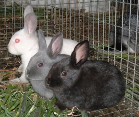 Продукты, необходимые в рационе кроликов