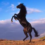 Продолжительность жизни лошадей: основные факторы