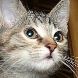 Определяем возраст котенка: несколько проверенных методов