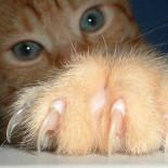 Как подстричь когти котенку правильно и безболезненно
