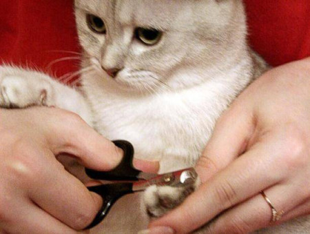 Как подстричь когти у кота в домашних условиях