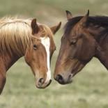 Особенности ухода за лошадьми: кормление, содержание