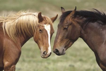 уход за лошадьми распорядок дня кормление