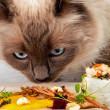 питание кошек правильный рацион
