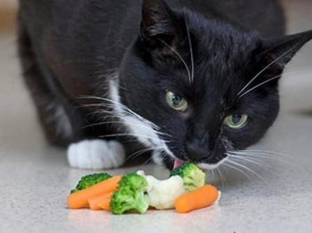 питание кошки питание витамины натуральные продукты