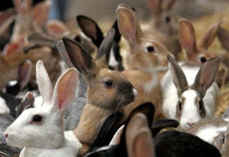 разведение кроликов как бизнес содержание