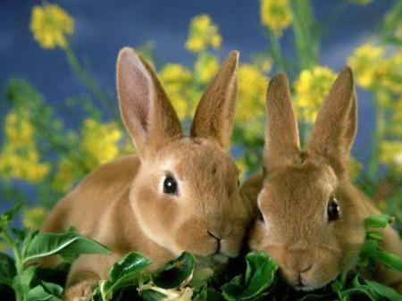 кормление кроликов трава