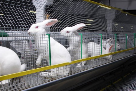 разведение кроликов как бизнес содержание уход кормление оборудование