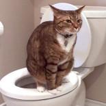 Пошаговое руководство по приучению котенка к лотку