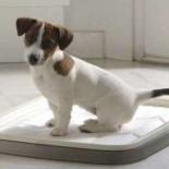 Понос у собаки: как вести себя в экстренной ситуации